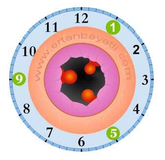 Hemoroid (Basur,mayasıl, babasıl) nedir