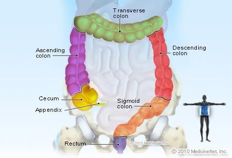kolonoskopi bolumleri - Kolonoskopi bayıltılarak nasıl yapılır?