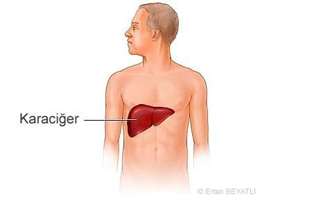 Karaciğer Fonksiyon Testleri (KFT, KCFT) 2