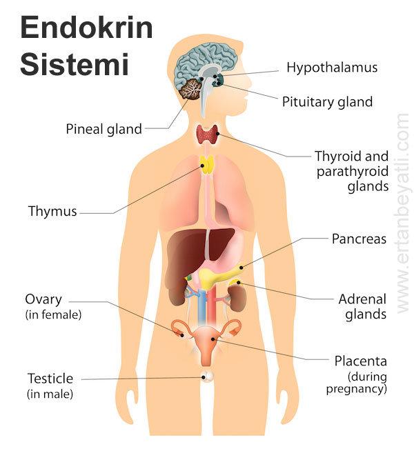 Hashimoto hastalığı 1