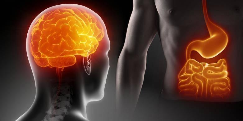 ikinci beyin, barsak
