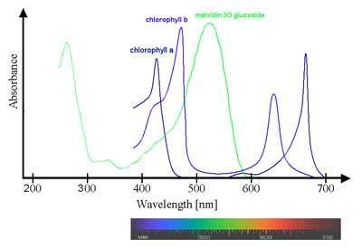 Güneş ışığı farklı renklerden oluşur; her biri 400 ila 700 nanometre (nm) arasında değişen farklı bir dalga boyuna sahiptir (1 Nanometre nm 1 metrenin milyarda biridir).